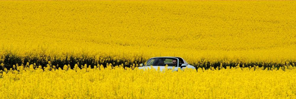 Louis Blom Auto's25